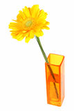 Yellow daisy flower in a vase Stock Image