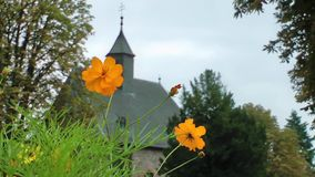 Yellow Daisy Flowers and the Church stock video footage