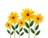 Yellow daisy flowers Stock Photography