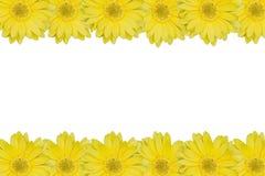 Yellow daisy frame Stock Photos
