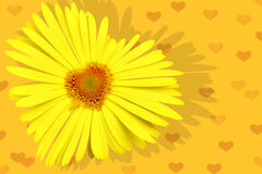 Yellow daisy-heart Stock Images