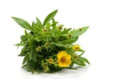Yellow daisy isolated on white Royalty Free Stock Photos