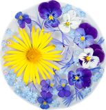 Yellow daisy and purple flowers Stock Image
