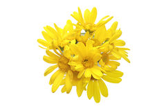 Yellow daisy in a vase Royalty Free Stock Photography