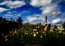 Yellow Daisy Wildflowers over the graveyard with dramatic cloudy sky, the image in dark tone. royalty free stock photo