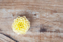 Yellow dalia flower on a wooden background Royalty Free Stock Photos