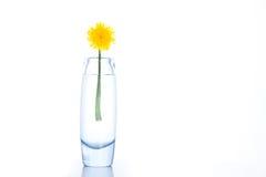 Free Yellow Dandelion Royalty Free Stock Photography - 19986807