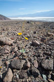 Yellow dandelion in death valley national park Stock Photos
