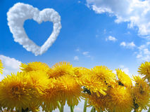 Yellow dandelion and heart Royalty Free Stock Photos