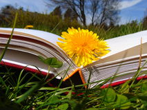 Yellow dandelion laying on hardback book in the garden. Yellow dandelion laying on hardback book in the grass with blue sky Stock Photos