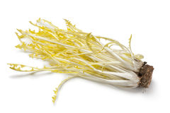 Yellow dandelion leaves Stock Photos
