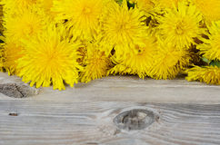 Yellow dandelion on a wooden surface Royalty Free Stock Photos