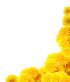 Yellow Dandelions Border Royalty Free Stock Photography