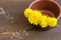 Yellow dandelions. In clay pot on a wooden surface stock image