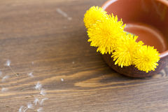 Yellow dandelions. In clay pot on a wooden surface royalty free stock photo