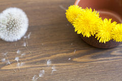 Yellow dandelions. In clay pot on a wooden surface royalty free stock images