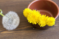 Yellow dandelions. In clay pot on a wooden surface stock photo