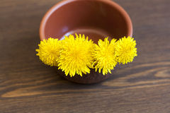 Yellow dandelions. In clay pot on a wooden surface stock photos