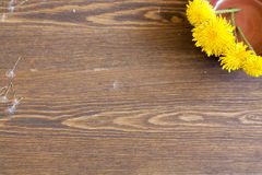 Yellow dandelions. In clay pot on a wooden surface royalty free stock photography