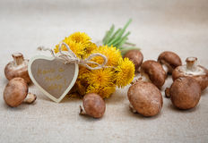 Yellow Dandelions,Fresh Mushrooms on the Linen Texture Tablecloth.Autumn Garden's Background.Wish Card Royalty Free Stock Image