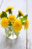 Yellow dandelions Stock Photo