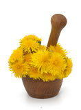 Yellow dandelions in a mortar Royalty Free Stock Photography