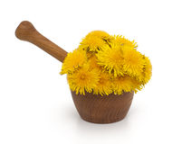 Yellow dandelions in a mortar Stock Image