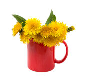 Yellow dandelions in a red cup Stock Photography