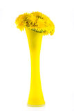 Yellow dandelions in the vase royalty free stock photos