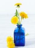 Yellow dandelios Stock Image