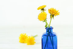 Yellow dandelios Royalty Free Stock Images