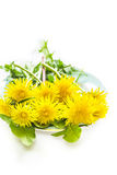 Yellow dandellion flowers on a plate, close up Royalty Free Stock Photo