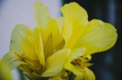 Yellow on the dark stock photo