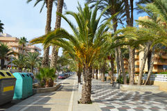 Yellow dates In The street - Palm Tree Lined Street - Recycling Bins Stock Photos