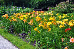 Yellow daylily flowers. A garden with a lot of daylily Hemerocallis flowers stock photo