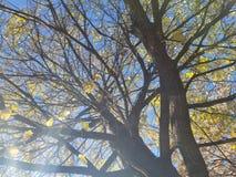 Yellow Daze 2. Yellow daze nature treea trees sky art royalty free stock image