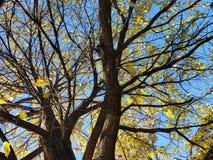 Yellow Daze. Treea trees sky nature stock photos