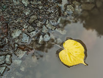 Yellow dead birch leaf in puddle Stock Photos