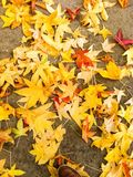 Yellow atumn leaves. Dead/yellow leaves on the ground Royalty Free Stock Photos