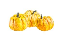 Yellow  decorative pumpkins on white background Stock Photos
