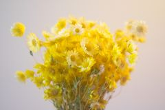 Yellow Flowers Bouquet Stock Images