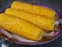Yellow delicious hot corn on the cobs. Yellow  hot corn on the cobs Royalty Free Stock Photos