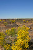 Yellow Desert Flowers and sky Stock Image