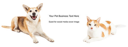 Yellow Dog Cat Cover Photo Stock Photos