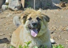 Yellow dog 4 Stock Photo