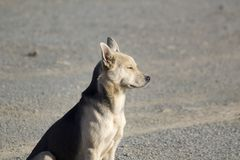 Yellow dog of the new year royalty free stock photos
