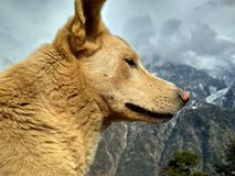 The profile of the dog in the mountains royalty free stock images