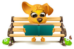 Yellow dog sits on bench and reads book Stock Photos