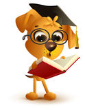 Yellow dog teacher reading book Royalty Free Stock Images
