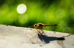 A yellow dragonfly under bright bubble bokeh stock photography